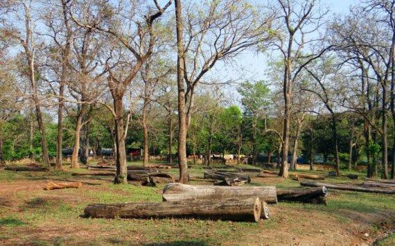 «Темные дорожки между деревьями»: Трутнев пригрозил кадровыми перестановками насовещании вХабаровске