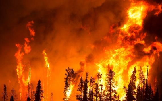 Растет количество лесных пожаров наЮжном Урале