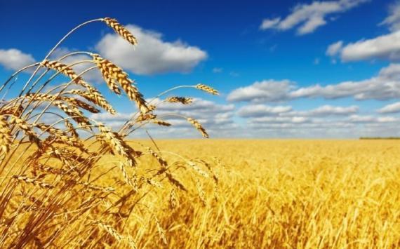 Омские аграрии получат больше 200 млн руб. компенсации задизтопливо