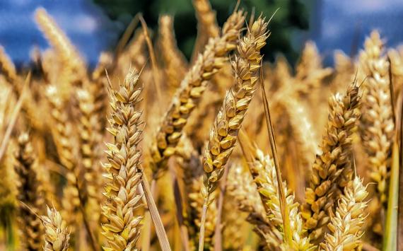 В РФ в последующем 2019 аграрии соберут 110 млн тонн зерна— Минсельхоз